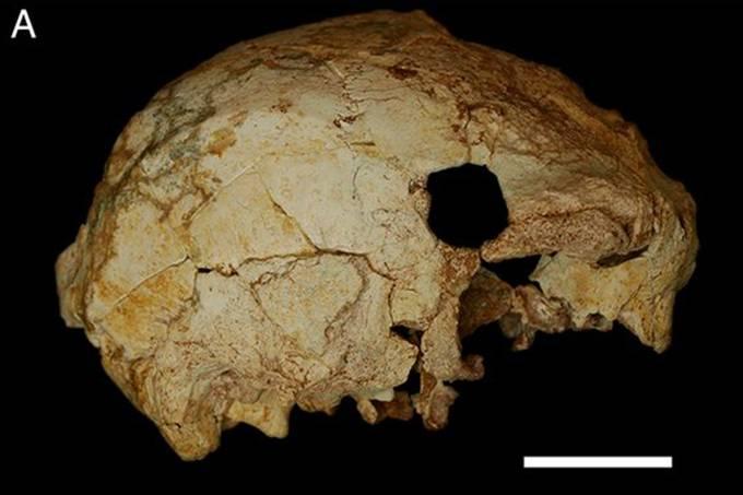 Resultado de imagem para crânio com 40 mil anos descoberto em portugal